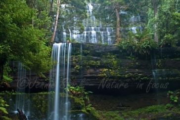 Russell Falls, Tasmania