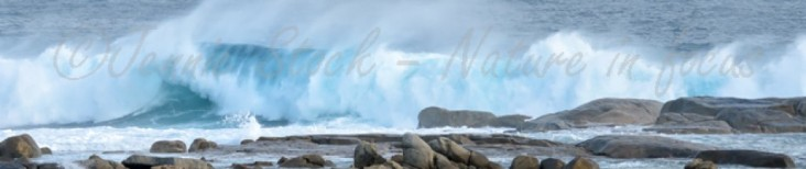 cropped-southern-ocean-c2a9jennie-stock-e28093-nature-in-focus.jpg