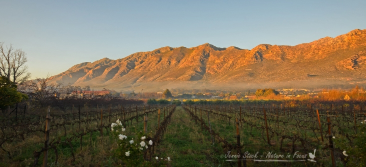Langeberg mountains at sunrise, Montagu