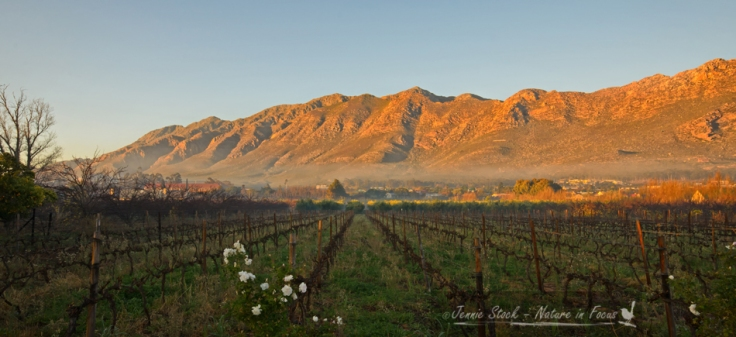 Langeberg at sunrise