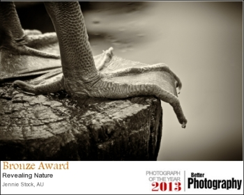 This image of a pelican's foot also did well in the WAPF interclub comp, coming 4th in Mono prints.