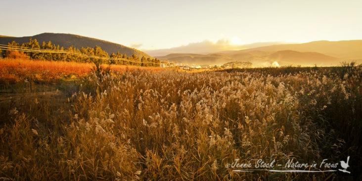 Montagu reed sunrise