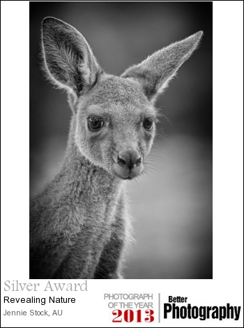 A young kangaroo captured at Pinnaroo Memorial park. This image also did well at camera club, winning the Mono prints in February.