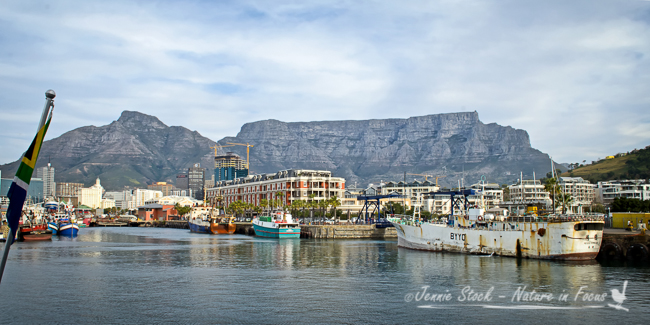 Table Mountain and Devil's Peak on the left, from the waterfront.