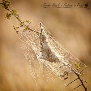 Backlit spider web in the bushveld