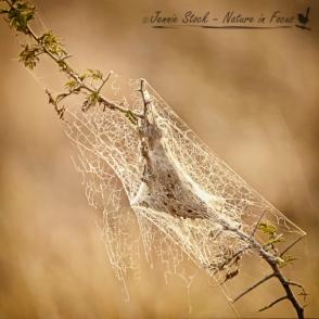 Backlit spider web in the bushveld