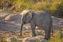 Small baby elephant