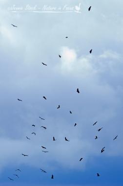 Vultures circling far away