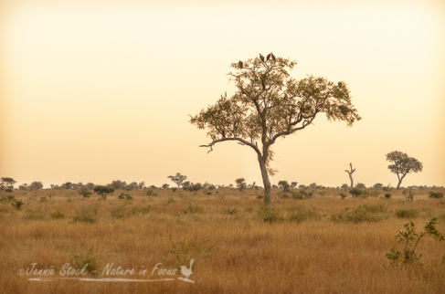 African savanna evening light