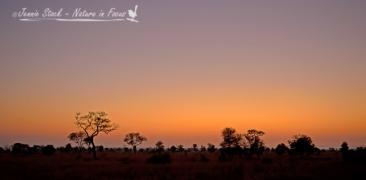 Bushveld sunrise