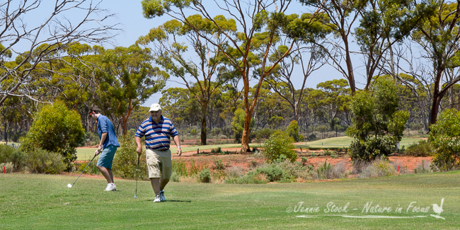 The well-manicured Kalgoorlie Golf Club