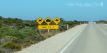 Typical Aussie road signs