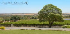 Clare Valley wine estate
