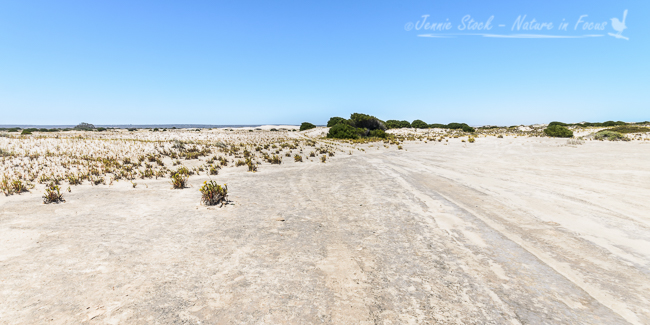 Sand plains near Eucla