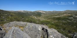 View from Charlotte's Pass