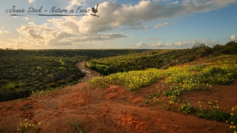 The view from Irwin Lookout in Coalseam Conservation Park last spring