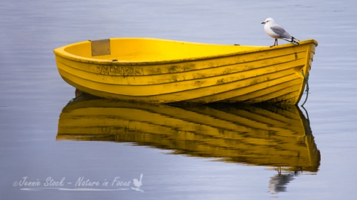 Bright yellow boat with gull, Stewart Island