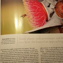 Article in Australian Geographic