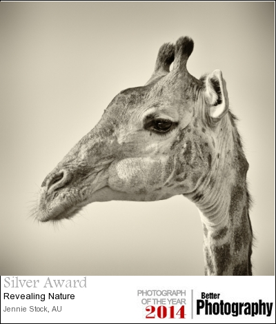 Giraffe portrait - Silver and 45th place