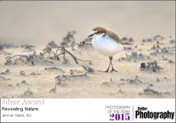 Plover - Silver