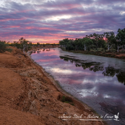 Murchison River at sunset, Wooleen