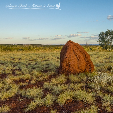 Termite Mound at Millstream