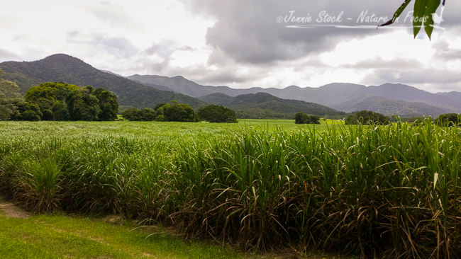 Far North Queensland - sugarcane, mountains and clouds