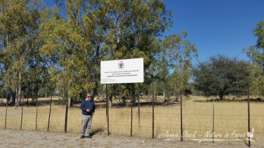 Eucalypt trees planted 40 years ago when Will was working with Forestry as part of his national service.