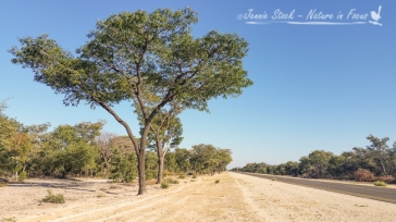 Heading east towards Rundu on an amazing road